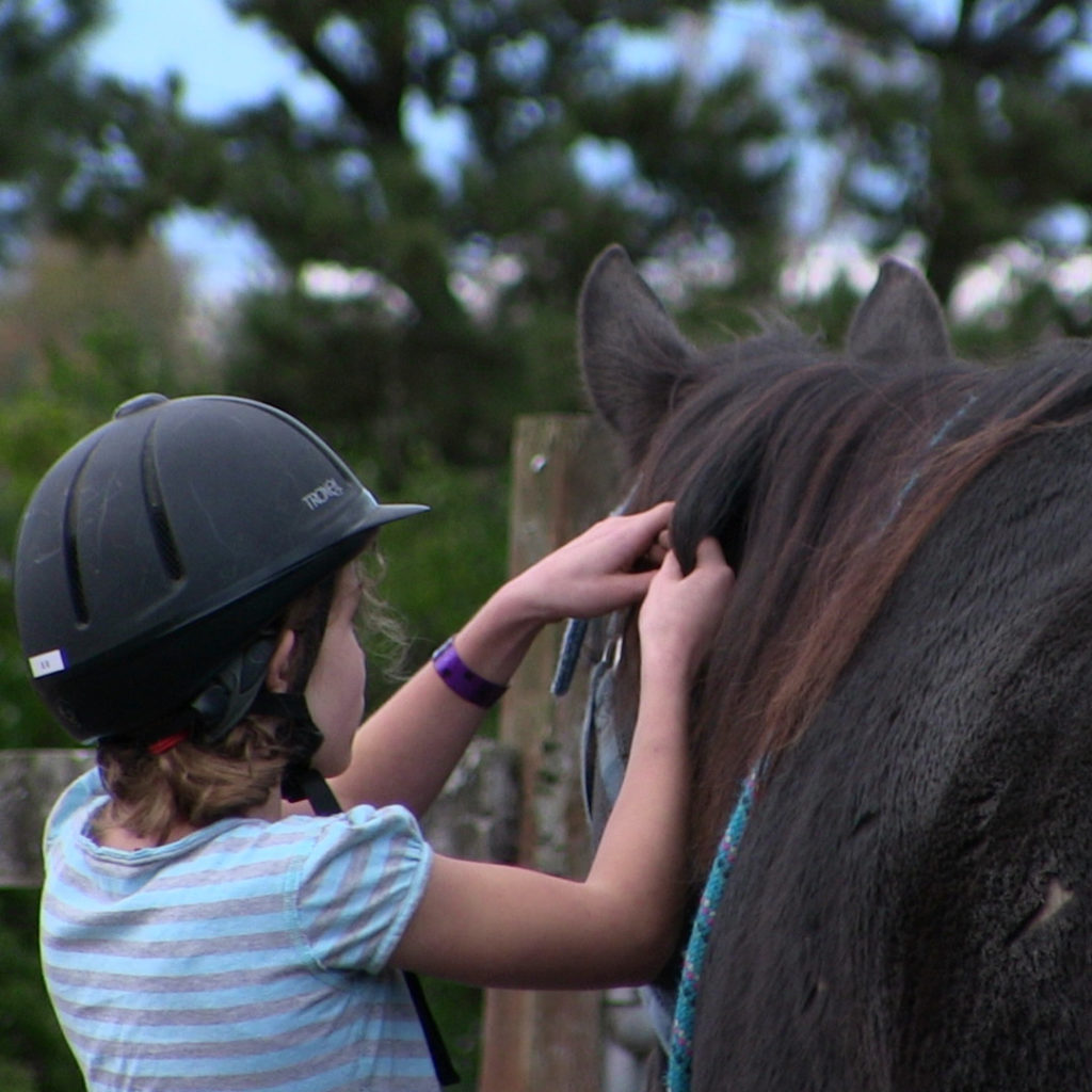 a girl tying a harness on a black horse