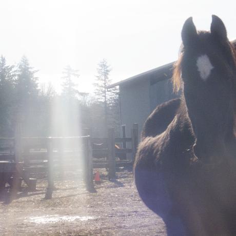 Healing Horses (2016)
